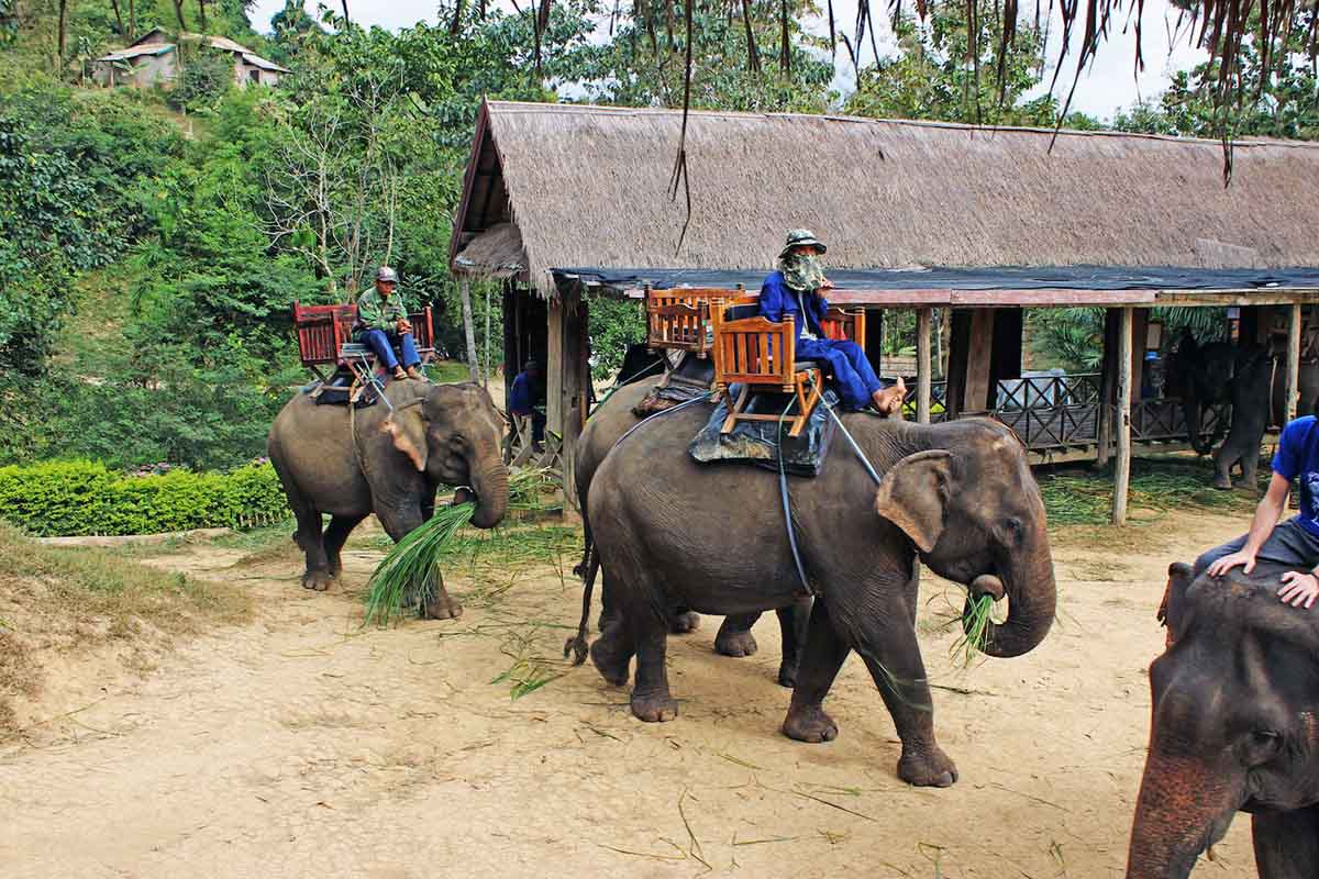 3. Adventure at Elephant Village in Amer