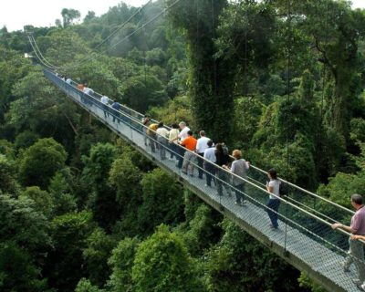 MacRitchie Nature Trail In Singapore