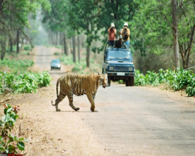 Nagzira Wildlife Sanctuary