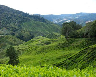 Picturesque Cameron Highlands