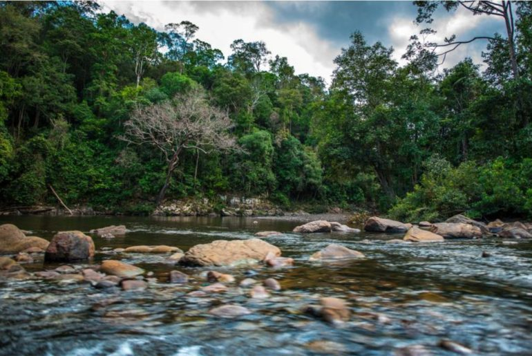 Things To Do In Taman Negara