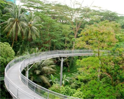 Walk The Southern Ridges In Singapore