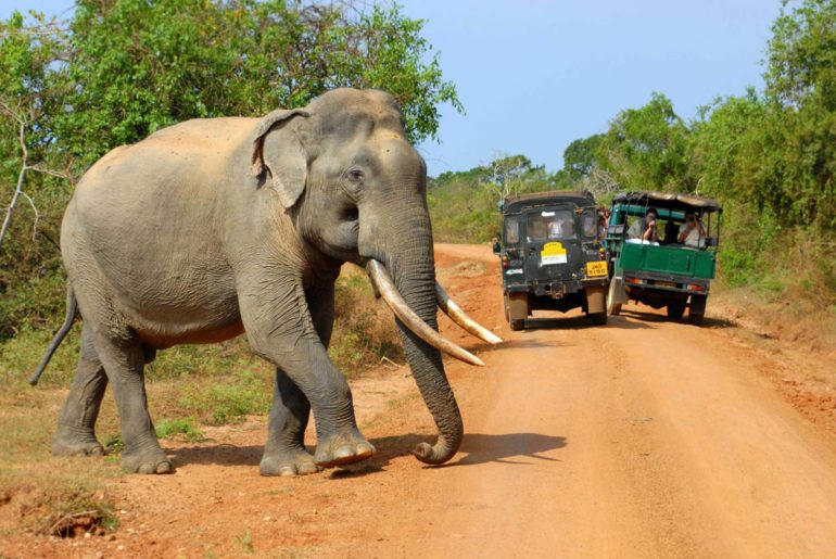 A Thrilling Date At Yala National Park In Sri Lanka