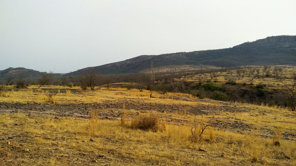 Ranthambore National Park 2