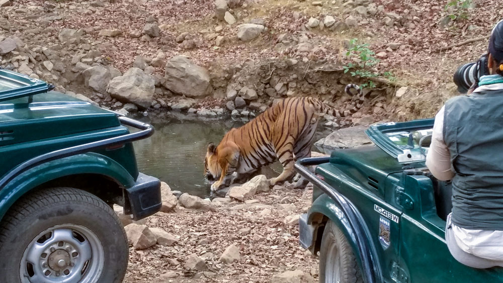 Ranthambore National Park 5