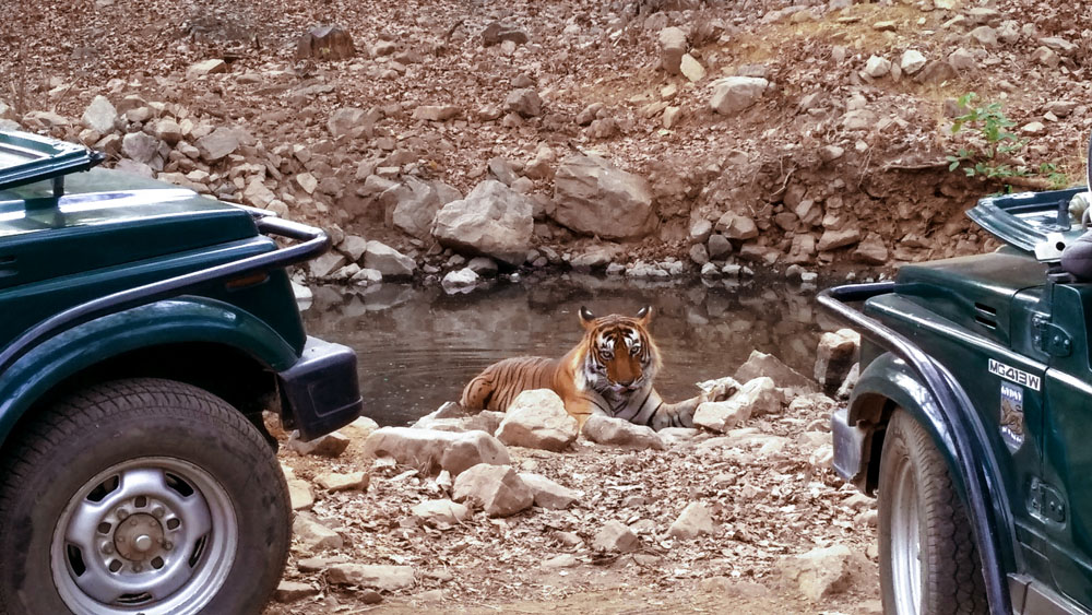 Ranthambore National Park 6