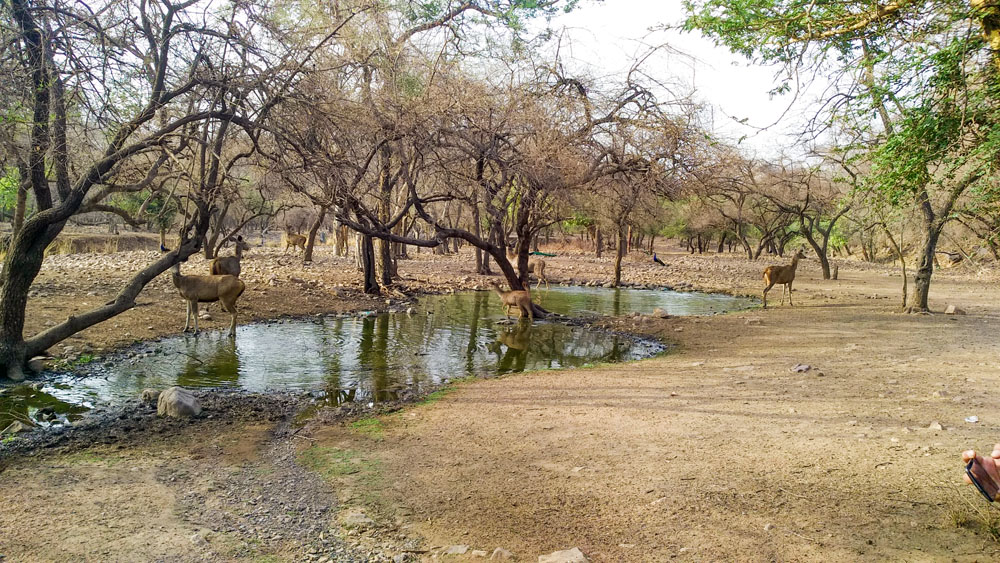 Ranthambore National Park 7