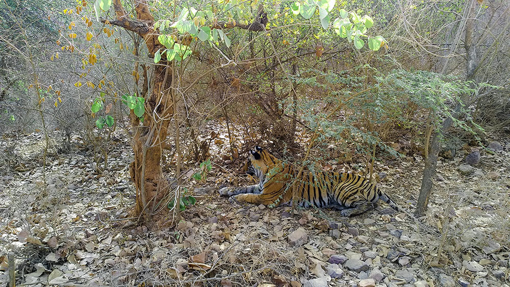 Ranthambore National Park 8