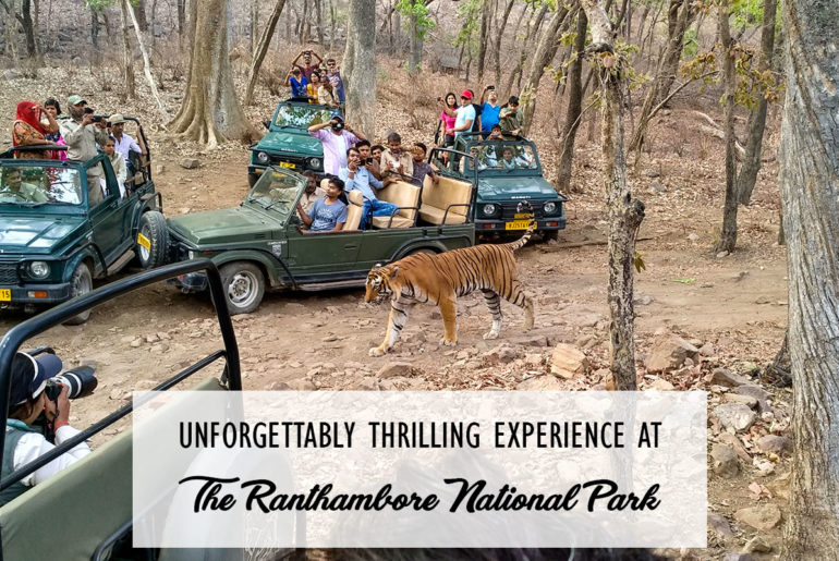 Ranthambore National Park Cover